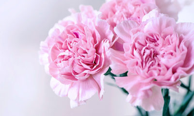 Condolences Flowers in Singapore